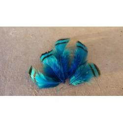 Lot de 30 Plumes de Perdrix teintées turquoise
