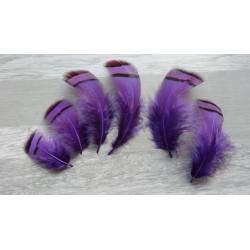 Lot de 50 Plumes de Perdrix teintées violettes