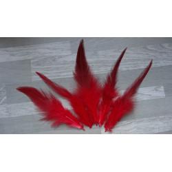 Lot de 50 Plumes de coq flammé rouge amarante