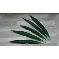 lot de 5 Plumes de queue de faisan lady amherst teintées vert émeraude