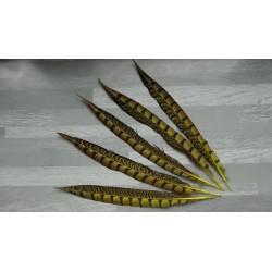 lot de 5 Plumes de queue de faisan lady amherst teintées jaune