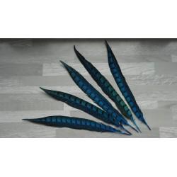 lot de 5 Plumes de queue de faisan lady amherst teintées turquoise