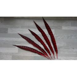 lot de 5 Plumes de queue de faisan lady amherst teintées rouge