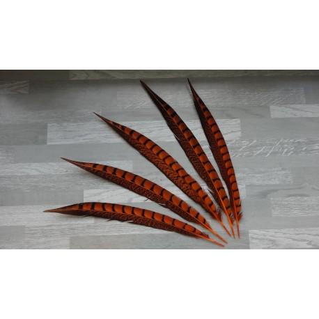 lot de 5 Plumes de queue de faisan lady amherst teintées orange