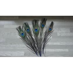 Lot de 5 Plumes de Paon tiges teintées bleu roi