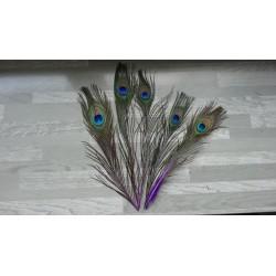 Lot de 5 Plumes de Paon tiges teintées violet