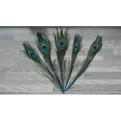 Lot de 5 Plumes de Paon tiges teintées turquoise