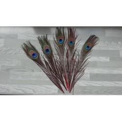 Lot de 5 Plumes de Paon tiges teintées rouge