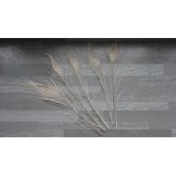 Lot de 5 Plumes de Paon teintées blanc