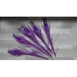 Lot de 5 Plumes de Paon teintées violet