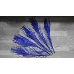 Lot de 5 Plumes de Paon teintées bleu roi