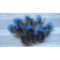 Lot de 20 Plumes de duvet de Paon bleu