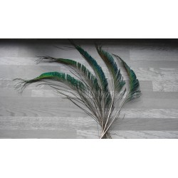 Lot de 10 Plumes de sabre de Paon naturel