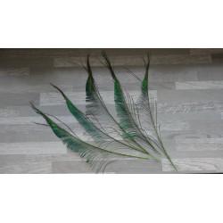 Lot de 5 Plumes de sabres de Paon teintés vert