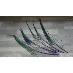 Lot de 5 Plumes de sabres de Paon teintés violet