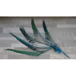 Lot de 5 Plumes de sabres de Paon teintés turquoise