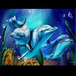 """Kit de tableau de strassage 3D """"Trio de dauphin"""""""