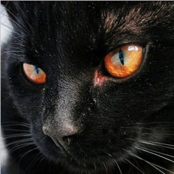 """Kit de tableau de strassage 3D """"Chat noir"""""""
