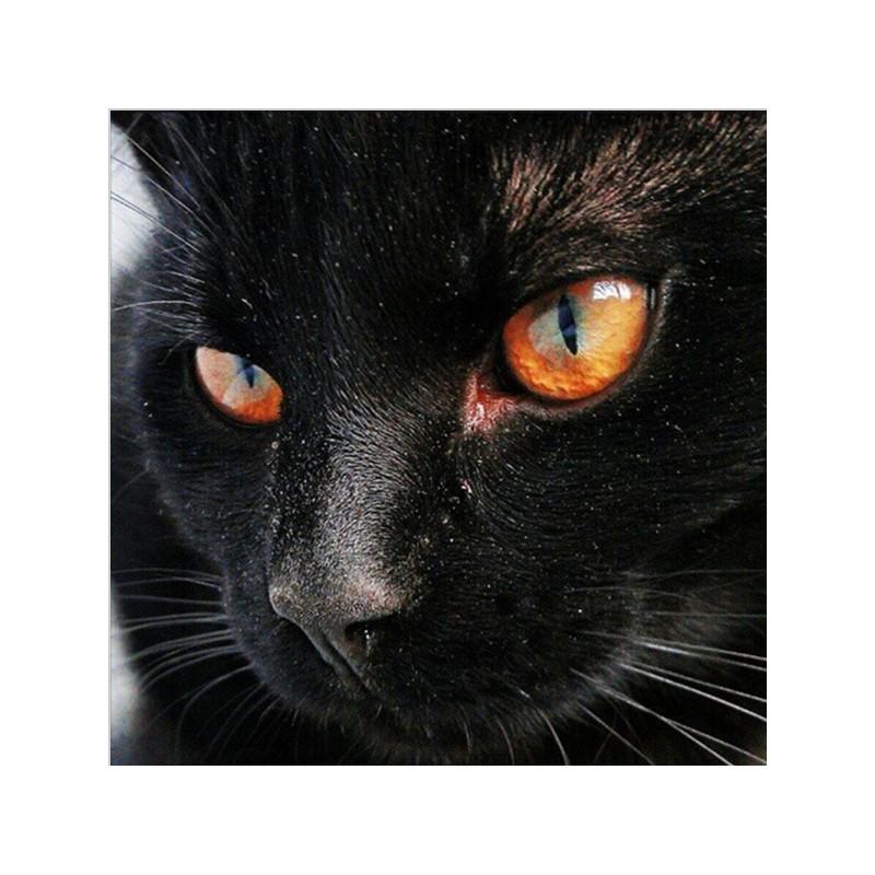 chaud noir chatte blanc coq mamans porno adultes