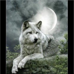"""Kit de tableau de strassage 3D """"Loup en noir et blanc"""""""