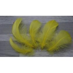Lot de 50 Plumes d'oie de couleur jaune poussin