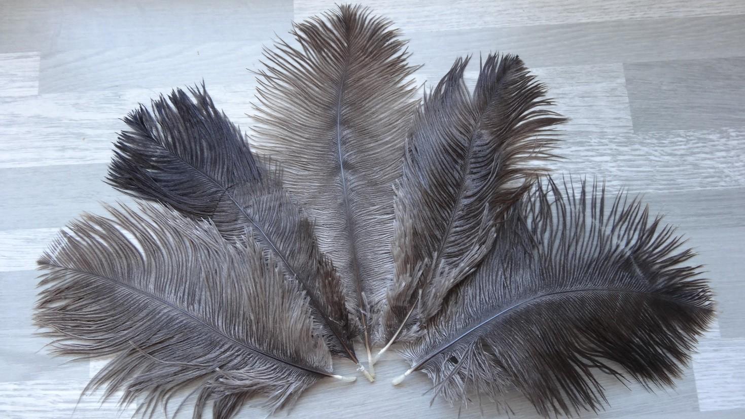 lot de 10 plumes pintade blanche naturel