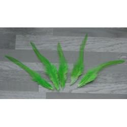 Lot de 20 Plumes de coq teintées de couleur vert anis
