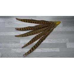 lot de 5 Plumes de queue de faisan teintées jaune