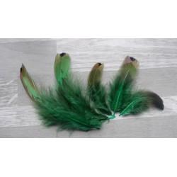 Lot de 50 Plumes de faisan royal coloré vert