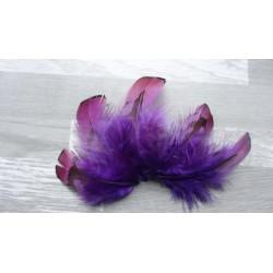 Lot de 10 Plumes naturelles de faisan doré teintées violet