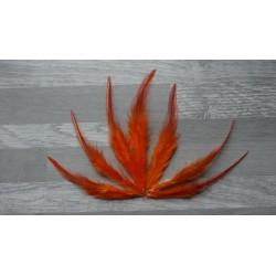 Lot de 50 Plumes de coq flammé orange