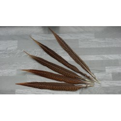 lot de 5 grandes Plumes d'ailes de faisan doré naturelles