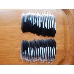 Lot de 5 Plumes d'ailes de Geai turquoise et noir
