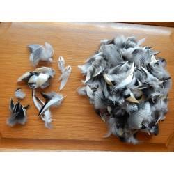 Lot de 20 Plumes mixtes de canard