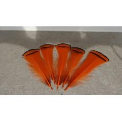 Lot de 10 Plumes de cou de faisan Lady Armherst teintées orange