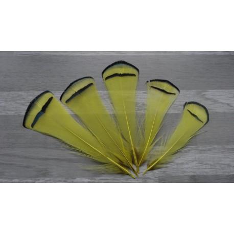 Lot de 5 Plumes de cou de faisan Lady Armherst teintées jaune
