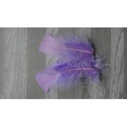 Lot de 20 Plumes de dinde couleur lilas