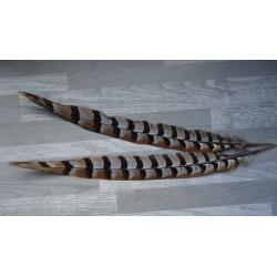 lot de 2 grandes Plumes d'ailes de faisan vénéré naturelles