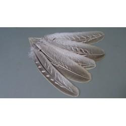 Lot de 10 plumes d'ailes de faisan naturelles