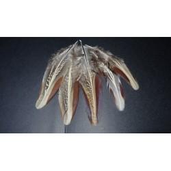 Lot de 20 plumes naturelles d'ailes de faisan