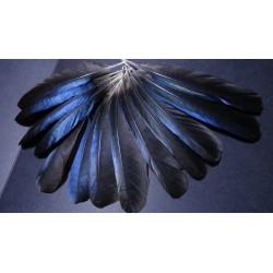 Lot de 5 plumes naturelles d'ailes de Pie
